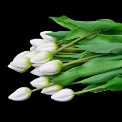 Tulipan BIEL - 1szt.